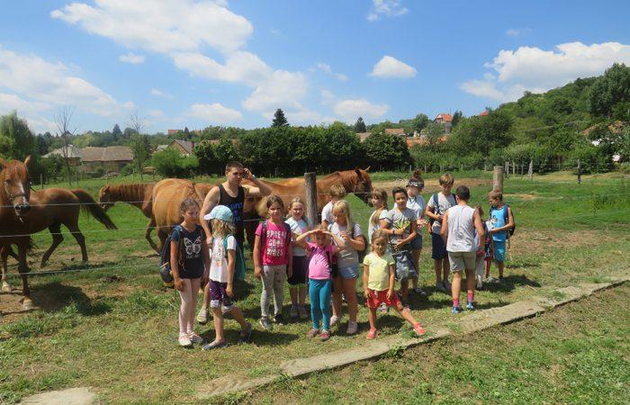 Vidéki hangulat tábor beszámoló